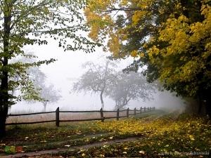 Foto · 'neblina no pomar', de Katarzyna Rubiszewska